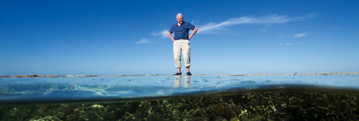 Sir David Attenborough (90)