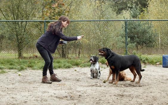 Honds